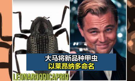 大马将新品种甲虫以莱昂纳多命名