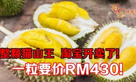 整颗猫山王  淘宝开卖了! 一粒要价RM430!